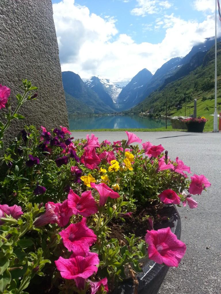 Blomster oppe ved inngang til Yrineset.